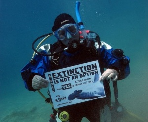 Nancy IDC, Egypt Red Sea #CITES4SHARKS